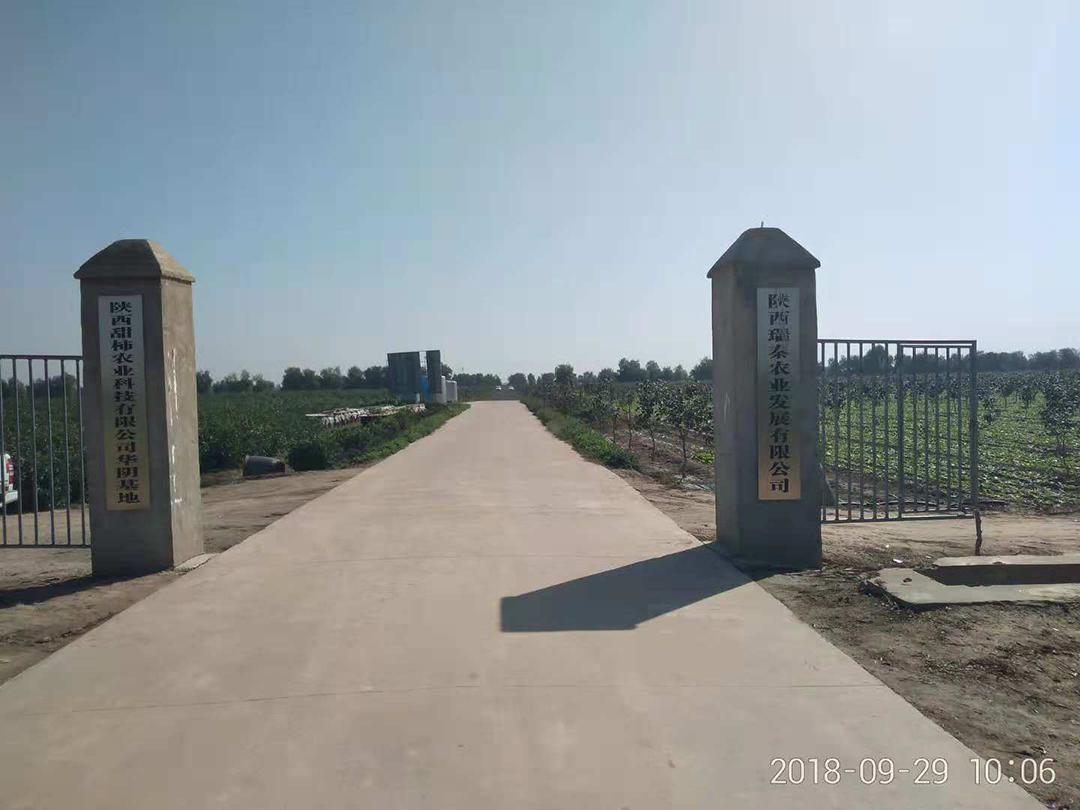 陕西伟德BETVlCTOR15农业公司华阴基地